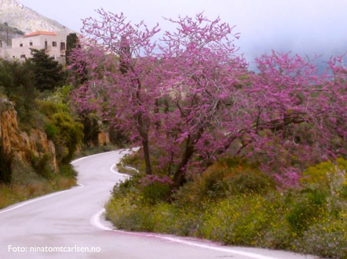 Peleponnes, Hellas.